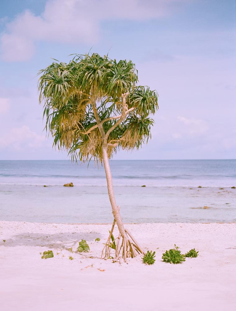 arbol-en-maldivas