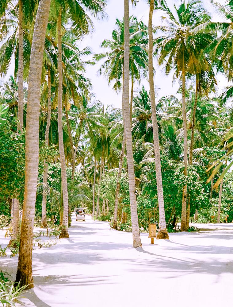 arboles-en-ressort-maldivas